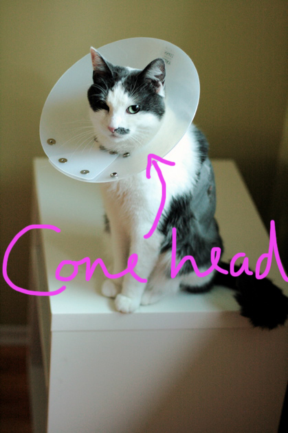 Mittens in his cone
